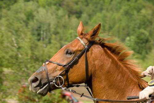 Equine Studies – Susan McEachern